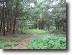 27 acres Hunting Land near Camden NY