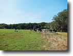 Florida Land 390 Acres Trenton Ranch and Investment