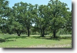 Texas Land 39 Acres 1831 Ward Mt Rd