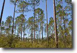 Florida Land 104 Acres Wacissa Hunting Tract