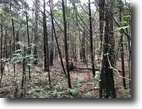 20 Acres for Sale in Oktibbeha County, MS