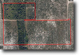 Florida Land 49 Acres Otto Polk Road Grove