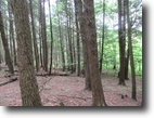 New York Hunting Land 123 Acres 123 Ac. Hunting Land Borders State Forest