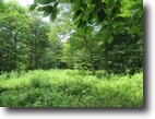 31 Acres Hunting Land Near Salmon River