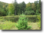 66 Acres Hunting Land 2 Ponds near Elmira