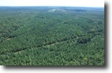 175 +/- Acres of Timber Land