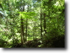 Tennessee Hunting Land 1 Acres Many potentials For This Tract