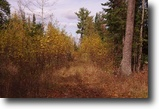Wisconsin Hunting Land 40 Acres Bennett, WI