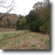 Tennessee Farm Land 48 Acres Fox Run Arcot Rd.