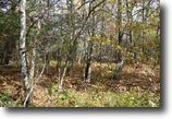5 acres Woods Hermon NY St Lawrence County