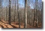 70 acres Timber & Farmland Springwater NY