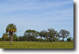 Florida Land 158 Acres Highway 17 Ranch