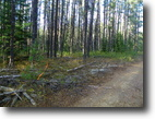 Ontario Hunting Land 40 Acres File 139- Property in Unorganized Township