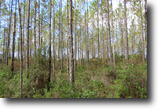 Florida Land 286 Acres Shady Grove Timber