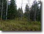 File 103 - 80.25 Acres in Newmarket Twp