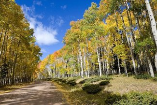Claim road in the fall