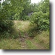 Kentucky Farm Land 237 Acres Just Listed: Hunters: 236.5 ac $199,500