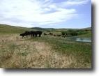 179 Acres Milk River Property