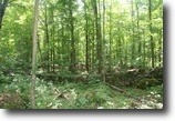 Pennsylvania Land 73 Acres Pvt. 73 Ac. Tract  - Conv. to Interstate