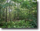 42 Acre Sportsman's Tract