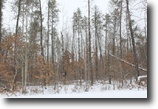 Wisconsin Hunting Land 5 Acres Trego, WI