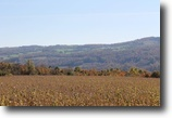 31 acres Lincoln NY with Owner Financing