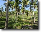 Philippines Land 1 Hectars Land Farm For sale
