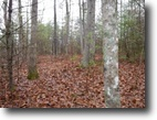 Tennessee Land 3 Acres 3.48ac, wooded, Daddy Creek runs through
