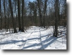 118 acres Hunting Land Catlin NY Timber
