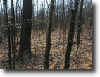 50 acres Hunting Scio NY 2648 Wolf Spring
