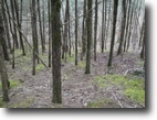 Tennessee Farm Land 10 Acres 9.63ac W/ Lake & Mtn Views Easy Walk To Th