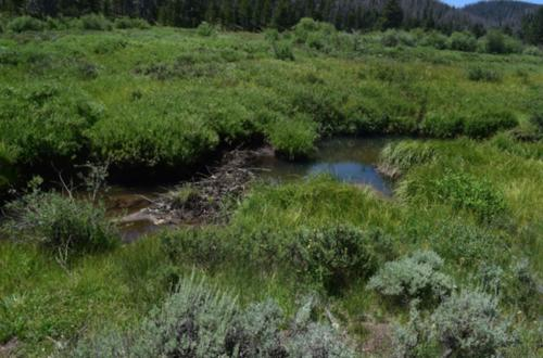 upper kauffman creek, claim creek colorado
