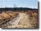 120 Acre Hunters Dream / Tree Farm
