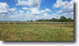 Florida Farm Land 40 Acres US 41 Frontage in Punta Gorda, Florida