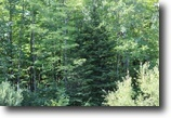 Wisconsin Hunting Land 160 Acres Poplar, WI