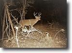 33 acres Lake Fork Land w/ Great Hunting