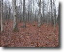 Tennessee Farm Land 64 Acres 64.36 ac Totally Wooded, Easy Terrain