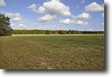 Florida Land 84 Acres Leesburg Residential Land