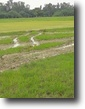 Uttar Pradesh Land 8 Acres Commercial Land