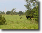 Florida Ranch Land 99 Acres Okeechobee Ranch and Development