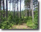 Michigan Hunting Land 40 Acres TBD Off Pike River Road  MLS #1044416