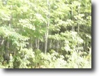 Michigan Hunting Land 11 Acres Lot 55 Silver River Reserve  MLS #1012219