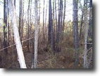 197 Acres Located in Attala Co.
