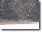 Wisconsin Waterfront 9 Acres Large Wooded Parcel on Matthews Lake