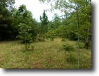 Mississippi Land 5 Acres Wooded land w/home site in small community