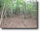New York Hunting Land 42 Acres New York Hunting Land bordering Forest