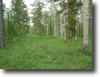 37.67 Acres Pristine Forested Land Alaska