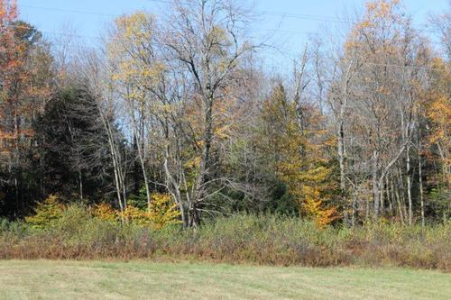 Land For Sale! 40 Acres Near Parish, NY (Property Image 15