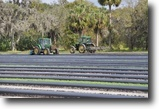 Florida Farm Land 289 Acres Severt Farm