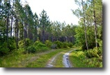 Florida Hunting Land 452 Acres Levy County 452 AC Hunting Timber